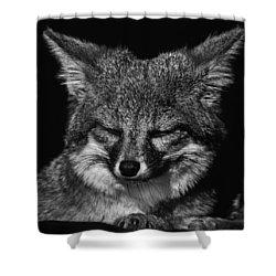 Island Fox  Shower Curtain