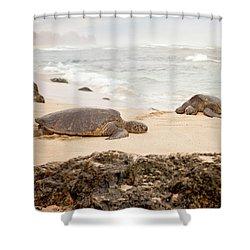 Island Rest Shower Curtain by Heather Applegate