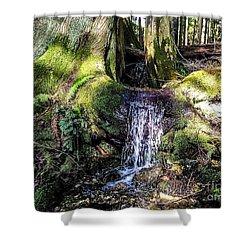Island Stream Shower Curtain by William Wyckoff
