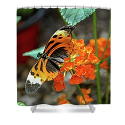 Ismenius Tiger Butterfly Shower Curtain