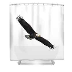 Isolated American Bald Eagle 2016-2 Shower Curtain