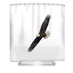 Isolated American Bald Eagle 2016-3 Shower Curtain