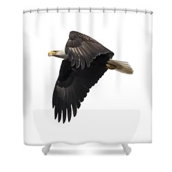 Isolated American Bald Eagle 2016-6 Shower Curtain