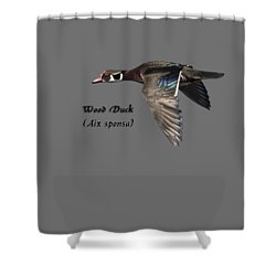 Isolated Wood Duck 2017-1 Shower Curtain