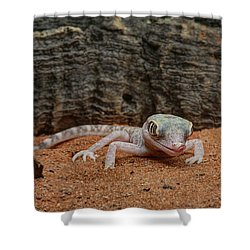 Shower Curtain featuring the photograph Israeli Sand Gecko - 1 by Nikolyn McDonald