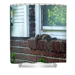 Shower Curtain featuring the photograph It Is Cool Here In The Shade by Denise Fulmer