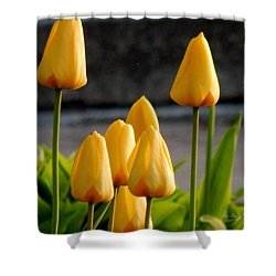 It Is Spring Shower Curtain