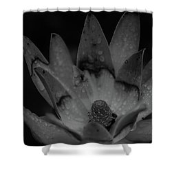 Shower Curtain featuring the photograph It Rained by Lora Lee Chapman