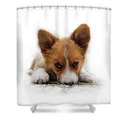 It Wasn't Me Corgi Shower Curtain
