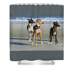 Italian Greyhounds On The Beach Shower Curtain