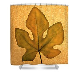 Shower Curtain featuring the photograph Italian Honey Fig Leaf 4 by Frank Wilson