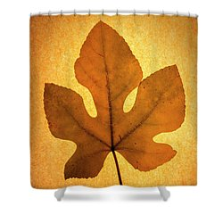 Shower Curtain featuring the photograph Italian Honey Fig Leaf by Frank Wilson