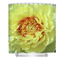 Itoch Peony  Shower Curtain