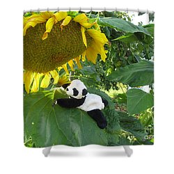 Shower Curtain featuring the photograph It's A Big Sunflower by Ausra Huntington nee Paulauskaite