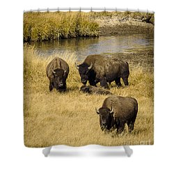 It's A Family Affair Shower Curtain by Sandy Molinaro