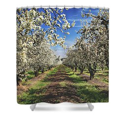 Shower Curtain featuring the photograph It's A New Day by Laurie Search