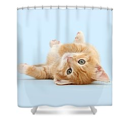 It's Sunday, I'm Feeling Lazy Shower Curtain