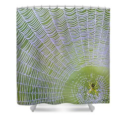 Its's Bitsy Spider Shower Curtain