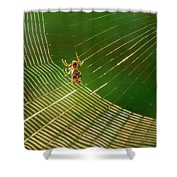 Itsy Bitsy Shower Curtain