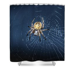Itsy Bitsy Spider Shower Curtain