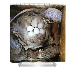 Tree Swallow Nest Of Feathers Shower Curtain