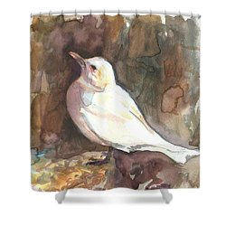 Ivory Gull Shower Curtain