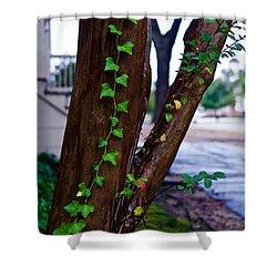 Ivy In Williamsburg Shower Curtain