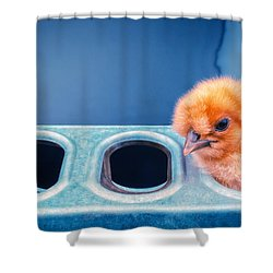 Shower Curtain featuring the photograph Iz In Da Feeder. by TC Morgan