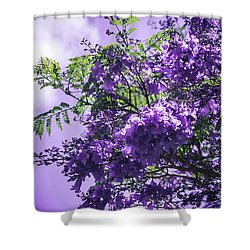 Shower Curtain featuring the photograph Jacaranda Mimosifolia Kula Maui Hawaii by Sharon Mau