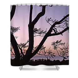 Shower Curtain featuring the photograph Jacaranda Silhouette by Rona Black
