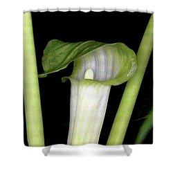 Shower Curtain featuring the photograph Jack In The Pulpit by Meta Gatschenberger