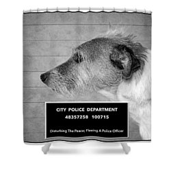 Jack Russell Terrier Mugshot - Dog Art - Black And White Shower Curtain by SharaLee Art