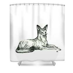 Jackal Sketch Shower Curtain