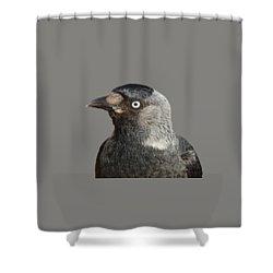Jackdaw Corvus Monedula Bird Portrait Vector Shower Curtain