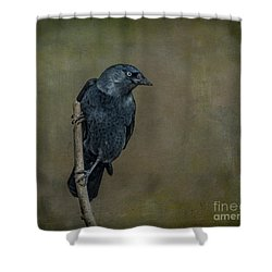 Jackdaw Shower Curtain