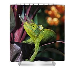 Jacksons Chameleon On Leaf Shower Curtain by Dave Fleetham - Printscapes