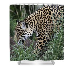 Shower Curtain featuring the photograph Jag by Gary Bridger