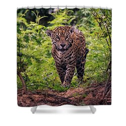 Jaguar      Shower Curtain by Wade Aiken