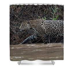 Jaguar In River Shower Curtain by Wade Aiken