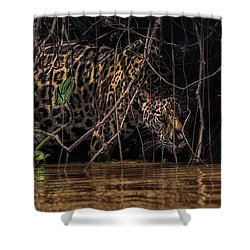 Jaguar In Vines Shower Curtain by Wade Aiken