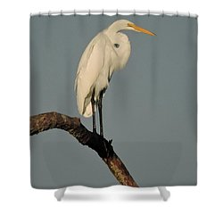 January Egret Shower Curtain by Peg Toliver