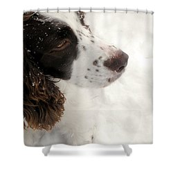 January Spaniel - English Springer Spaniel Shower Curtain by Angie Rea