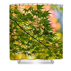 Shower Curtain featuring the photograph Japanese Acer Leaves During Fall by Clare Bambers