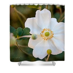 Shower Curtain featuring the photograph Japanese Anemone by Terri Harper