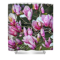 Shower Curtain featuring the photograph Japanese Blooms by Gregory Daley  PPSA