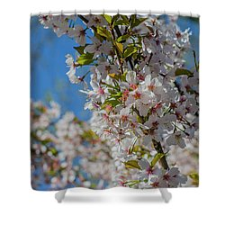 Japanese Cherry  Blossom Shower Curtain by Daniel Precht