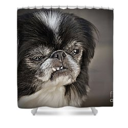Japanese Chin Doggie Portrait Shower Curtain by Jim Fitzpatrick