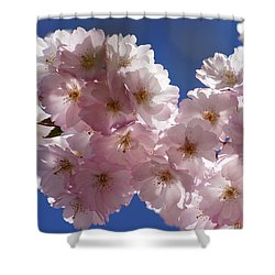 Japanese Flowering Cherry Prunus Serrulata Shower Curtain