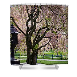 Japanese Lantern Shower Curtain by Susan Cole Kelly