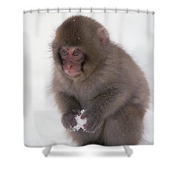 Shower Curtain featuring the photograph Japanese Macaque Macaca Fuscata Baby by Konrad Wothe